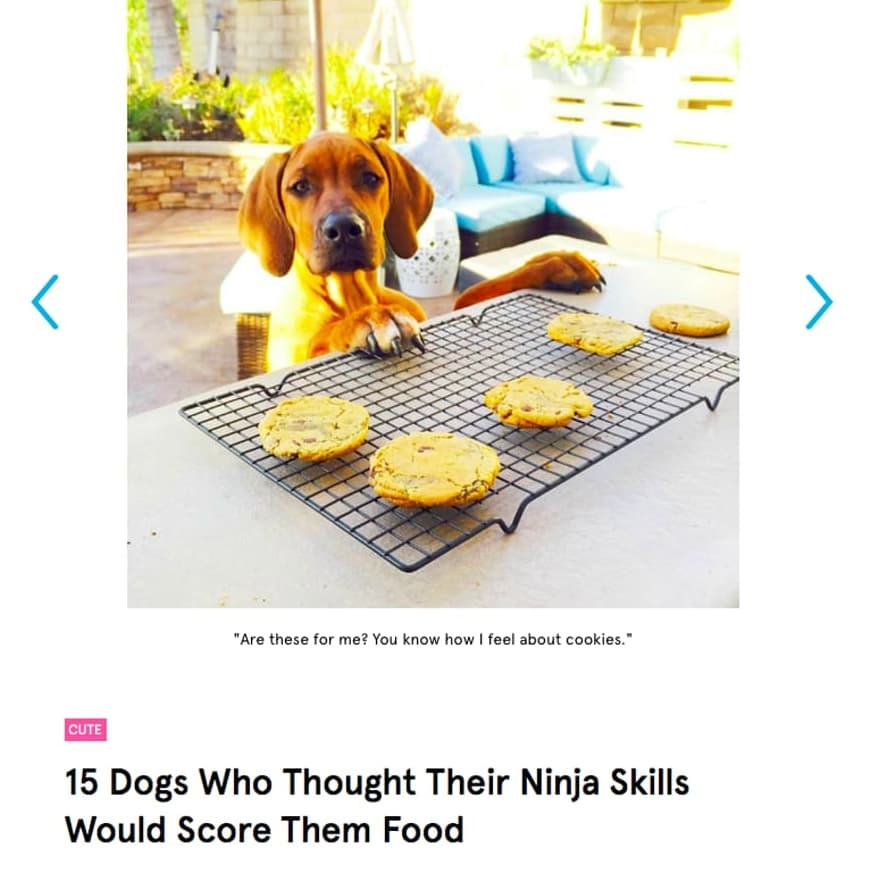 Barkbox blog